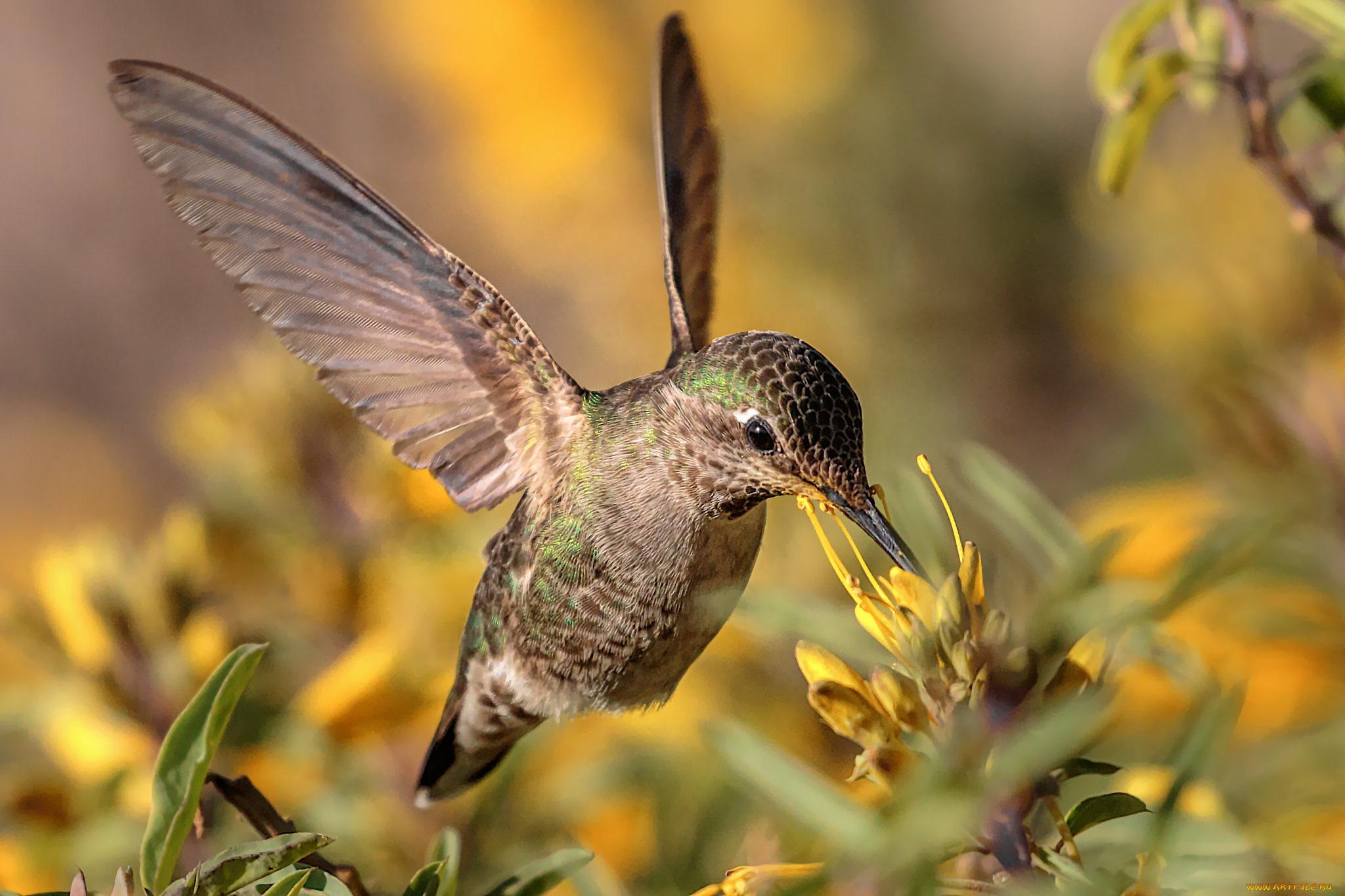 Животные картинка колибри обращения просьбой